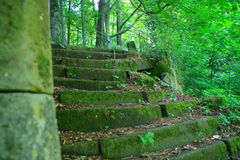 Stairs to forest. Landscape in National Park Czech Switzerland, Czech republic, Europe stock photography