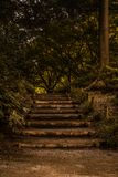 Stairs in the wild to the forest full of green and trees stock image