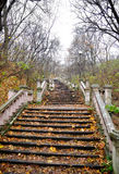 Stairs to heaven. This photograph represents old stairs in a park in fall Stock Photography