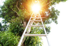 Stairs to the light or heaven. On the tree Stock Photography