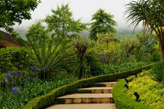 Stairs to paradise. Stairs to vineyards in Delaire Wine Estate Garden Stock Image