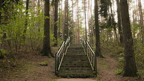 Stairs to the top. Autumn daytime. Smooth dolly shot.  stock video footage