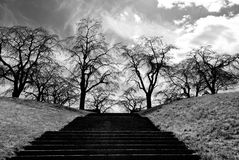 Stairs to trees without leafs Royalty Free Stock Image