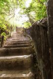 Stairs in tropical forest Stock Image