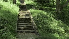 Stairs in tropical rainforest at summer day - Batumi, Georgia.  stock footage