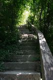 Stairs up in the green forest royalty free stock image