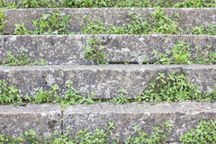 Stairs with vegetation. Background image of some steps from a stone stair, with some green vegetation growing among the stone stock photo