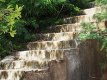 Stairs With Vegetation In Cuba. Stairs with vegetation leading up from beach in Cuba Royalty Free Stock Photos