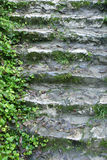 Stairs and vine. Branches of the vine on the old stone stairs in the Bulgarian village Royalty Free Stock Photo