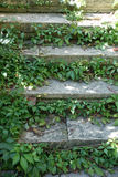 Stairs and vine. Vine on the stone steps of the stairs of an old monastery in Bulgaria Royalty Free Stock Photography