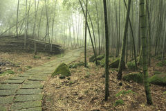 Stairs way in bamboo forests Stock Image