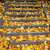 Stairs wiht leaves Royalty Free Stock Photos