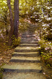 Stairs in woods Stock Photos