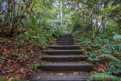 Stairs Through The Woods Stock Photos