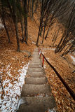 Stairst through the forest Stock Image