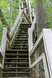 Stairway Ascending a Ravine in a Deciduous Forest Royalty Free Stock Images