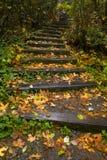 Stairway através das árvores Fotos de Stock Royalty Free
