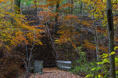 Stairway in an Autumn Forest Stock Photos