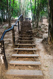 Stairway in the bamboo forest Royalty Free Stock Images