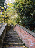 Stairway between colored trees, autumn. Falled leaves and colorfuly trees on a isolated place royalty free stock photo