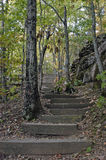 Stairway da floresta Fotografia de Stock