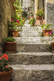 Stairway with flowers Royalty Free Stock Images