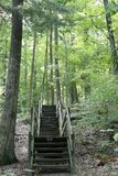 Stairway in the Forest. A wooden stairway leading to a forest Stock Photography