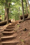 A stairway in the forest Stock Image
