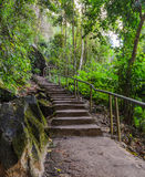 Stairway in the forest Royalty Free Stock Photography