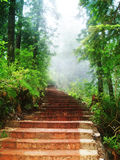 Stairway through forest  Stock Photography