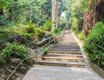 Stairway in the forest Stock Image