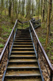 Stairway in the forest. In early spring Royalty Free Stock Photo