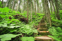 Stairway through forest. Stairway through green forest somewhere in British Columbia Canada Stock Photo