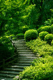 Stairway Through the Forest Royalty Free Stock Photo