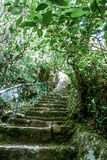 Stairway in a forest Royalty Free Stock Images