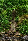 Stairway. In the forest, by the river at Bigar, Romania Stock Image