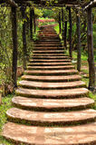 Stairway in garden Stock Photography