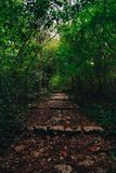 Stairway to the forest. A stairway in the green forest with a soft light behind Stock Images