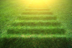 Stairway  with green grass. Royalty Free Stock Images