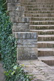 Stairway with green plant Royalty Free Stock Photography