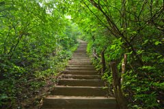 Stairway in the jungle Royalty Free Stock Photography