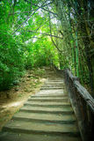 Stairway in the jungle. Wooden staircase in the jungle stock photo
