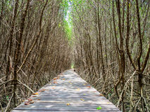 Stairway leading to the tropical mangrove in the sea shore Royalty Free Stock Photography