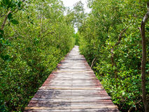 Stairway leading to the tropical mangrove in the sea shore Royalty Free Stock Photo