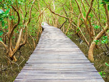 Stairway leading to the tropical mangrove in the sea shore Royalty Free Stock Photos