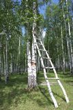 Stairway na floresta Imagem de Stock