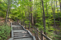 Stairway at the Namsan Park in Seoul Royalty Free Stock Image
