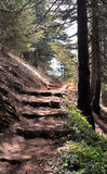 Stairway in nature Stock Image