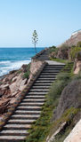 Stairway by the ocean with agave plant. Stock Photos