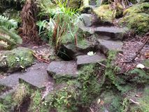 Stairway. In a rain forrest on big island hawaii Royalty Free Stock Photography